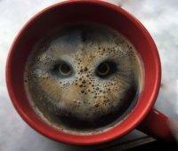 Owl Hoot